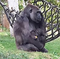 Affen im Zoo